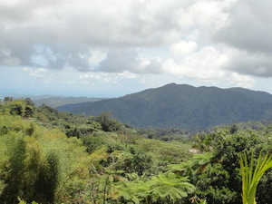 El Yunque Rainforest Half-Day Trip from San Juan Photos