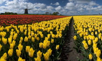 Dutch Windmills and Countryside Day Trip from Amsterdam Including Cheese Tasting in Edam Photos