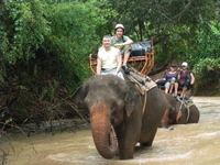 Elephant Trekking in Pattaya Photos