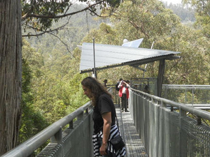 Huon Valley and Tahune Forest Airwalk Tour from Hobart Photos