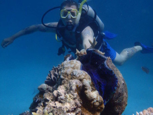 Great Barrier Reef Diving and Snorkeling Cruise from Cairns Photos