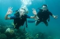 Grand Cayman Stingray City Dive Photos
