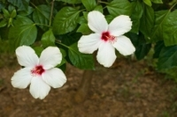 Grenada Spice Garden Tour Photos