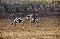 Hell's Gate National Park Walking Tour with Elsamere Conservation Park Visit from Nairobi Photos