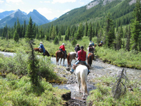 Horseback-Riding Tour in Banff with Optional BBQ Lunch Photos