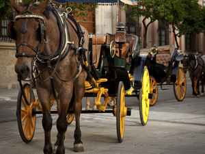 Private Horse and Carriage Tour of Seville Photos