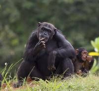 Jane Goodall Institute South Africa - Chimpanzee Eden Walking Tour Photos
