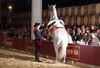 Jerez and Cadiz Day Trip from Costa del Sol with Winery Tour, Andalusian Horse Show and Sightseeing Cruise Photos