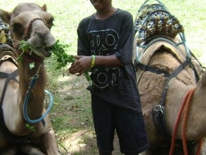 Camel Ride and Plantation Tour Photos