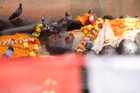 Kathmandu Day Trip: Budhanilkantha and Hike Through Shivapuri National Park  Photos
