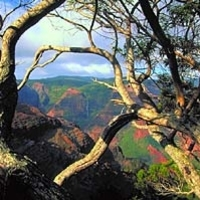 Kauai Waimea Canyon Experience Photos