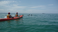 Kayaking with Dolphins in Byron Bay Photos