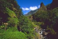 Lahaina Shore Excursion: Tropical Plantation Tour and Iao Valley with Optional Maui Ocean Center Photos