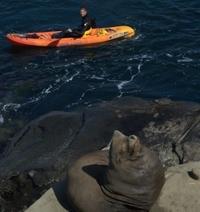 La Jolla Whale Watching Kayak Adventure Photos