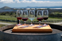 Maipú Luxury Wine-Tasting Tour from Mendoza Including Trapiche Winery Photos