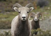 Maligne Valley and Wildlife Tour Photos