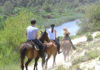 Mallorca Evening Tour: Horseback Riding, Dinner and Dance Photos