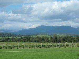 Yarra Valley Wineries and Puffing Billy Steam Train Day Tour from Melbourne Photos