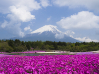Mt Fuji Day Trip with Heritage Walking Tour from Tokyo Photos