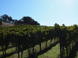 San Francisco Shore Excursion: Private Tour to Wine Country by Luxury Transport Photos