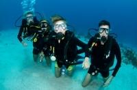 Nassau Shark Diving Photos