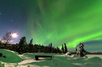 Northern Lights Overnight Tour with Dog Sledding Photos