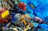 Oahu Certified Scuba Diving Tour Photos