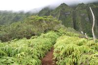 Oahu Mountain Rainforest Small Group Adventure Photos