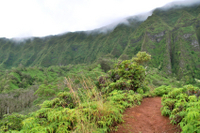Oahu Shore Excursion: Rainforest Hiking Adventure Photos