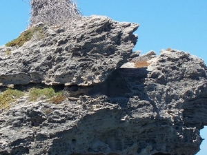 Rottnest Island Tour from Perth or Fremantle including Wildlife Cruise Photos