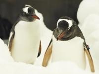 Penguin Passport at Melbourne Aquarium Photos