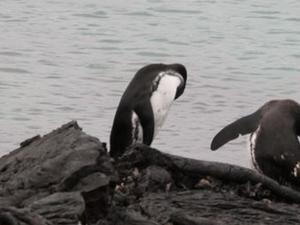 Galapagos Islands Explorer Package from Santa Cruz Island Photos