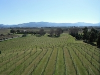 Picton Shore Excursion: Marlborough Wine Region Small-Group Tour