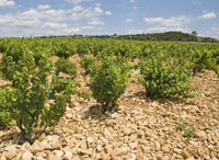 Private Rhone Valley Wine Tour from Avignon: Chateauneuf-du-Pape and Tavel Photos