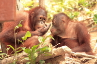 Private Tour: Orangutan Island, Taiping Zoo and Perak Museum from Penang Photos