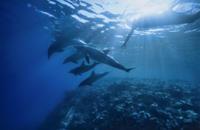 Private Tour: Dolphin Swim Adventure in Madeira Photos