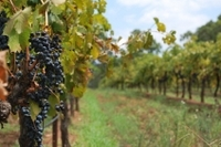 Private Tour: Hunter Valley Region and Boutique Wineries Day Trip from Sydney Photos