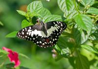 Private Tour: Kuala Lumpur Nature In The City Tour including Butterfly Park Photos