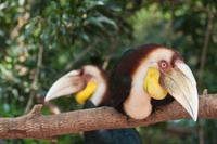 Private Tour: Langkawi Rainforest Trekking Adventure Photos