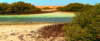 Private Tour: Mangroves Photos