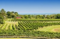 Private Tour: Niagara Falls Wineries  Photos
