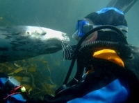 Puerto Madryn Shore Excursion: Scuba Dive with Sea Lions  Photos