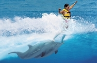 Puerto Vallarta Shore Excursion: Swimming with Dolphins Photos