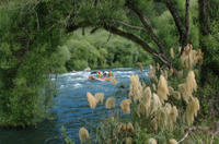 Rangitaiki River White Water Scenic Rafting from Rotorua Photos
