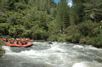 Rangitaiki River White Water Rafting from Rotorua Photos