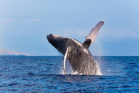 Reykjavik Shore Excursion: Whale-Watching Cruise Photos