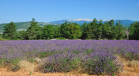 Rhone Valley Wine Tour from Avignon: Chateauneuf-du-Pape, Ventoux and Tavel