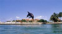 Riviera Maya Small-Group Wildlife Adventure: Manatees and Dolphins  Photos
