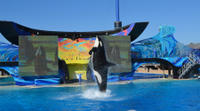 San Diego Round-Trip Theme Park Transport: SeaWorld San Diego Photos