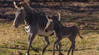 San Diego Round-Trip Theme Park Transport: San Diego Zoo Safari Park Photos